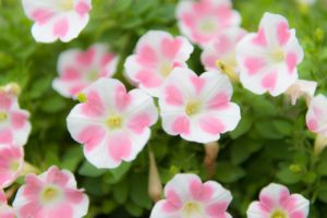 サロン前花壇の花